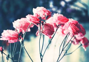 Tranh Canvas về hoa 1