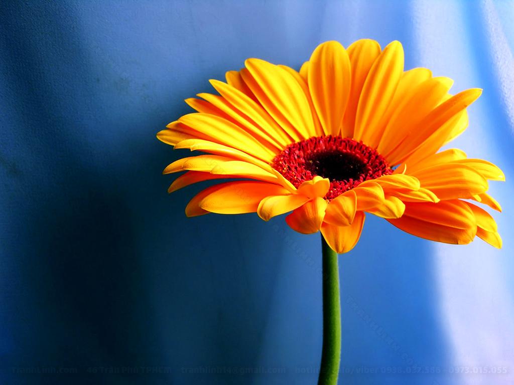 Tranh Canvas về hoa 2