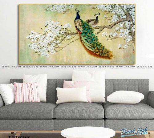tranh canvas chim cong vuong gia 10