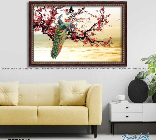 tranh canvas chim cong vuong gia 5