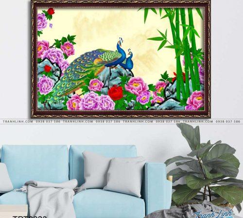 tranh canvas chim cong vuong gia 55