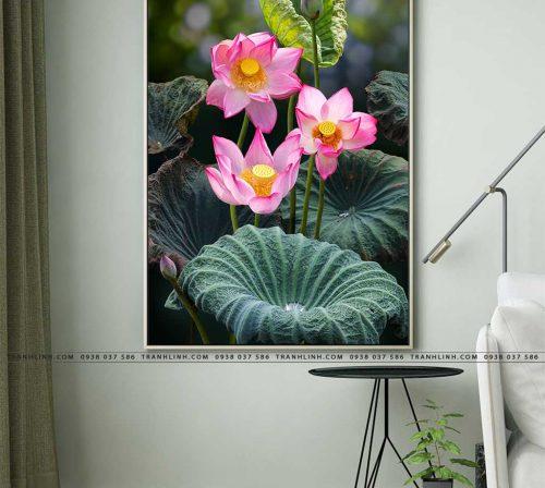 tranh canvas hoa 891