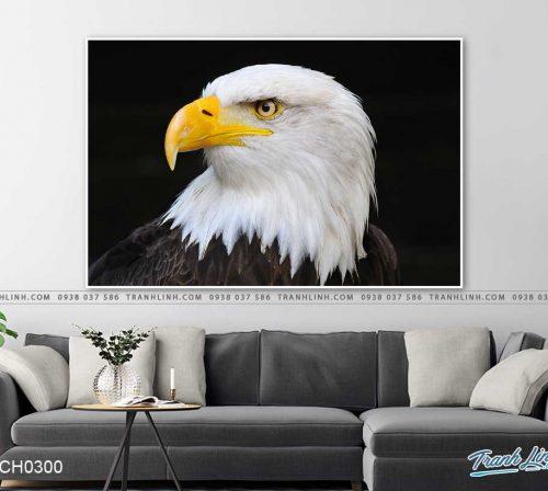 tranh chim dai bang 1