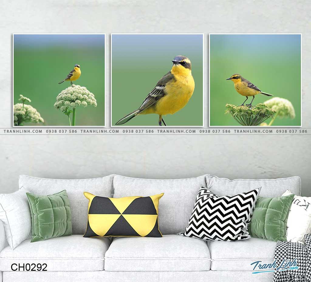 tranh con chim 5