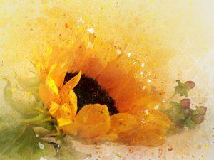 ý nghĩa hoa hướng dương