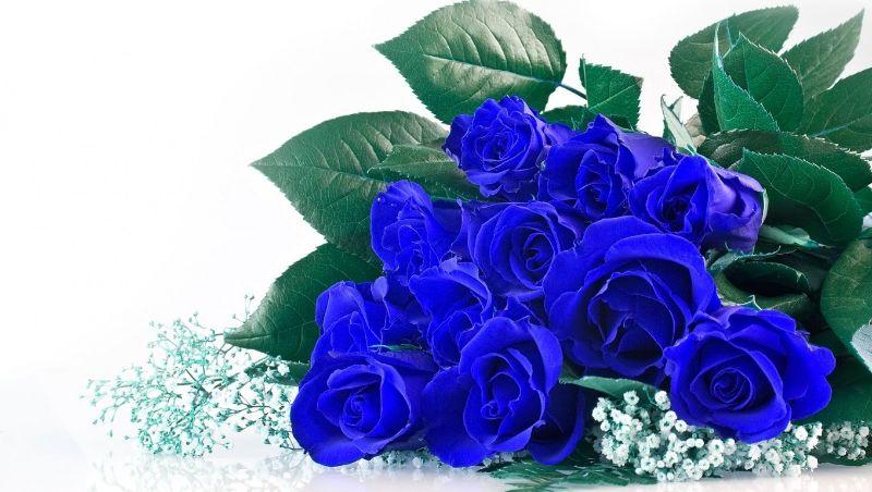 ý nghĩa hoa hồng xanh
